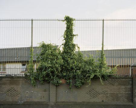 """Image tirée de la série """"Peacewalls"""" / © Philippe Grollier"""